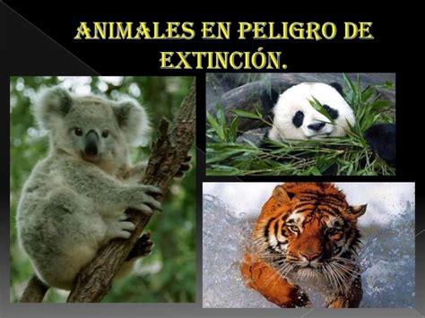 imagenes de animales en extincion animales en peligro de extinci 243 n completo