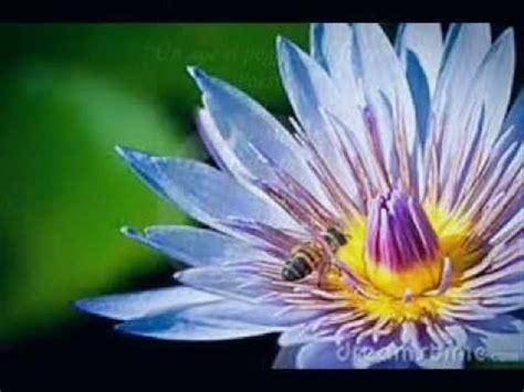 poesia sul fiore quot un ape si poggi 242 sul fiore quot poesia di sveva medori