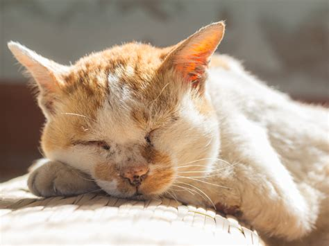 ab wann kann katzen decken lassen alte katze ab wann gelten katzen als senioren