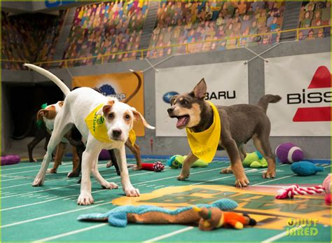what is the puppy bowl puppy bowl 2017 meet the dogs the more photo 3853452 2017