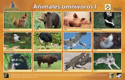 imagenes de animales carnivoros herbivoros y omnivoros los animales animales carn 237 voros herb 237 voros y omn 237 voros