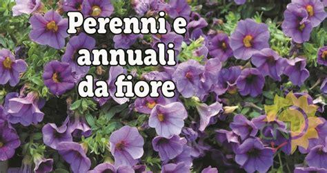 pianta da fiore perenni e annuali da fiore casanatura vivaio