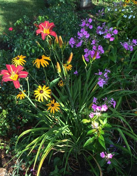 flowers to go top 39 ideas about great plant combinations on