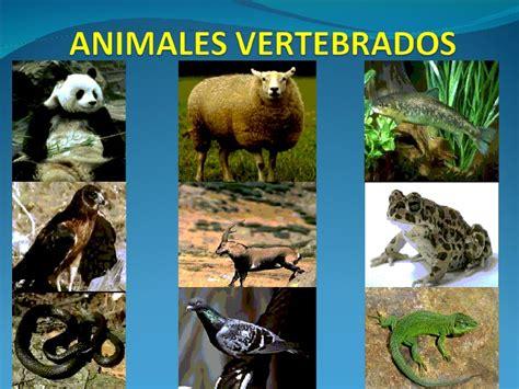 los animales vertebrados animales vertebrados