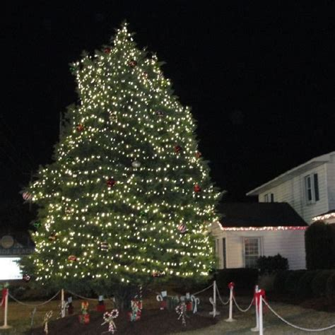 myrtle tree lighting the best myrtle events festivals