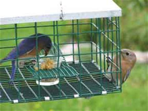 Enclosed Bird Feeder Bluebird Feeder Bluebirdnut