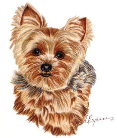 how to paper a yorkie puppy 1000 images about yorkie on terrier westies and