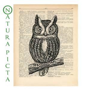 Vintage owl drawing screech owl dictionary print
