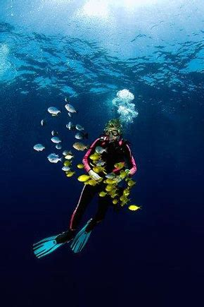 scuba diving in mozambique books lotta olsson frilansjournalist about