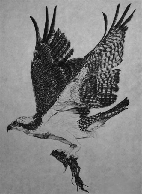 osprey tattoo designs 42 best tags tattoos images on helicopters