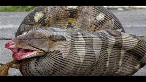 imagenes extrañas del mundo las serpientes mas raras del mundo youtube