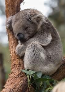 L Shaped Patio Las 25 Mejores Ideas Sobre Koalas En Pinterest Y M 225 S