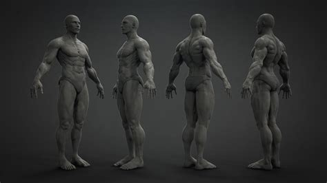 zbrush tutorial human body badking