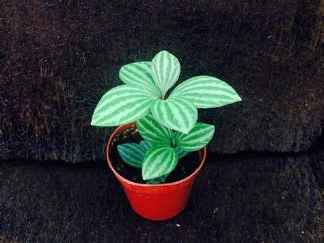 small low light plants best 25 small indoor plants ideas on pinterest