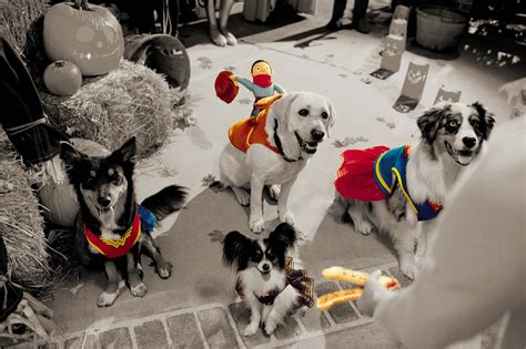 petsmart costumes petsmart creates howls and wags with frightfully delightful products