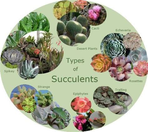 types of succulents chubby spikey textured smooth gardens smooth and what kind of