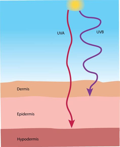 tanning bed tips uva rays and uvb rays protecci 243 n solar spf pinterest