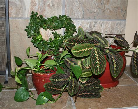home plants decor decorating with house plants livebinders blog