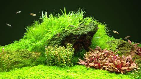 Chihiros Aquatic Studio Doctor Nano Replacement Kit vis nano aquarium amazoona onderwerp de transformatie cocoontje aquascaping