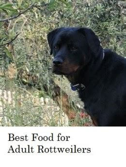 food for rottweiler what s the best food for rottweilers pethelpful