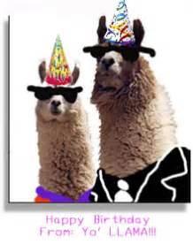 llama birthday photo by peace942 photobucket