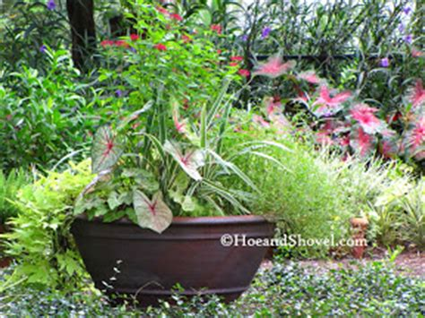 container gardens for florida hoe and shovel summer blue