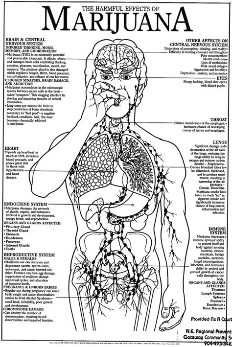 Effect Of Exercise On Thc Detox by 42 Best Substance Abuse Prevention Activities Resources