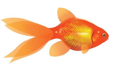 gold fish clip goldfish clipart clipartion