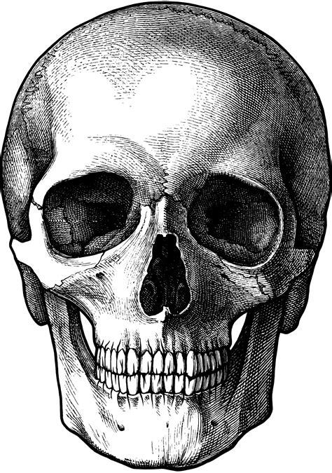 imagenes de calaveras vintage vintage skull drawing for photo transfer thanks a