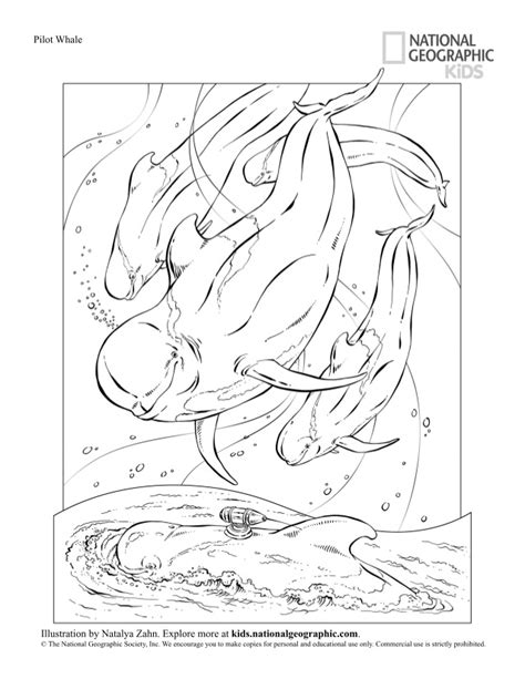 lion coloring pages national geographic pin by laura peachey on coloring pages coloring pages