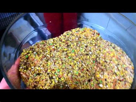 egg food mix for my masked lovebirds youtube