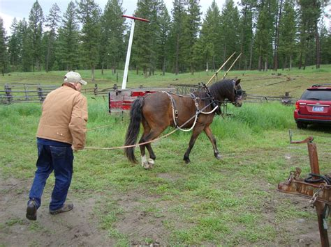 harness lessons with doc hammill friends books tom triplett and the pony doc hammill