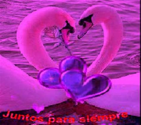 imagenes con movimiento en whatsapp fotos de amor con movimiento fotos de amor