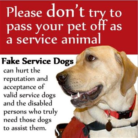 how to get involved with service dogs the snobs we don t just better we are better