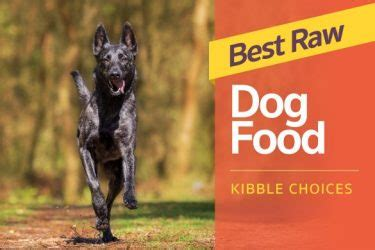 best kibble for dogs labrador hq everything labrador retriever