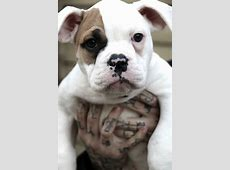 BLANCHE - Villalobos Rescue Center Missing Dog