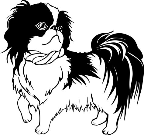 how to clip a maltese shih tzu shihtzu breeds picture
