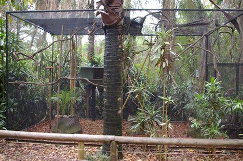 marmoset enclosure bing images animal habitats habitats image