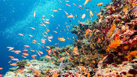 Mukena Bali Tiedye Belissimo By Gie 4 the great barrier reef is in serious trouble these fish
