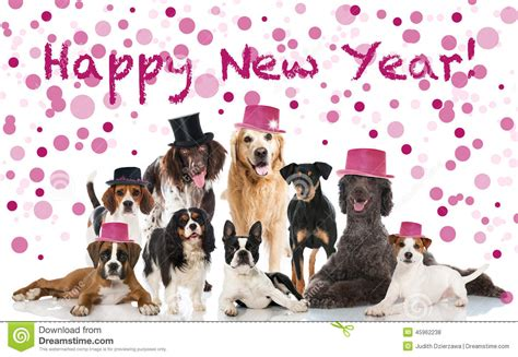 happy new year puppy happy new year stock photo image of king 45962238