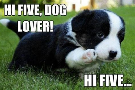 hi puppy hi 5 lover i dogs bff