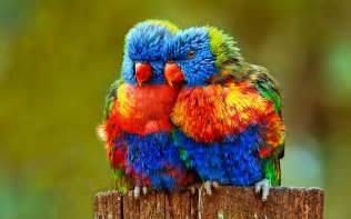 most colorful birds parrot talking to it 39 s friends most beautiful colorful