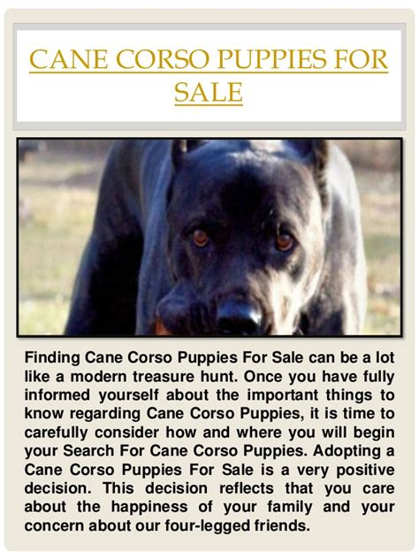corso puppy for sale corso puppies