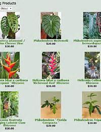 list of tropical plants summer nursery the nursery store