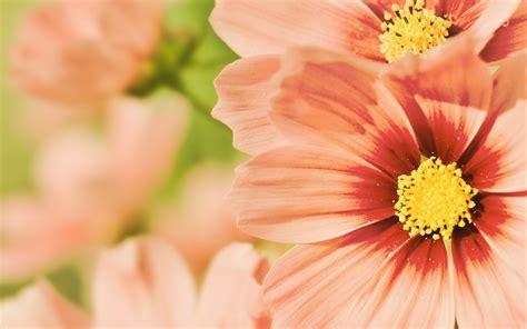 summer flowers wallpaper beautiful desktop wallpapers 2014 summer flower wallpaper desktop wallpapersafari