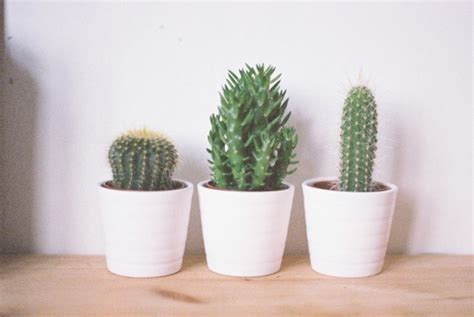 Plant For Bedroom home accessory small plants bedroom cactus