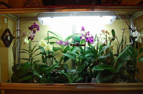 orchidee in casa orchidee in casa quali altre specie da serra calda
