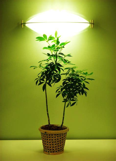 artificial light   greenhouse garden greenhouse