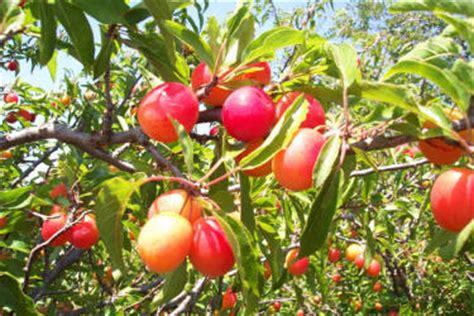 fruit tree nursery oregon 綷 綷 綷 綷 綷