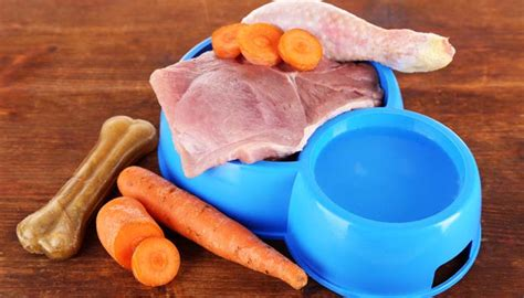 food diet for dogs expert is food diet safe for dogs